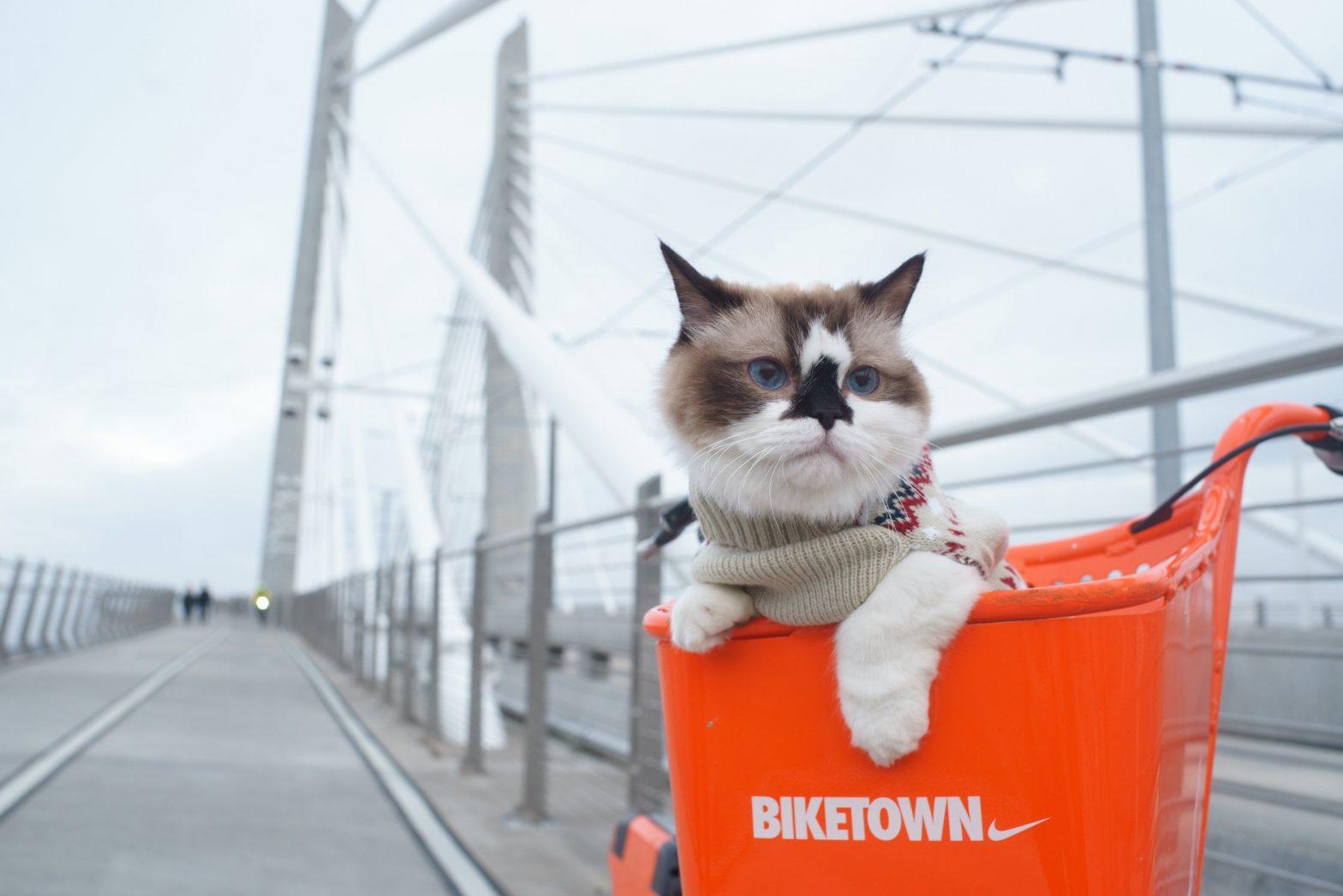 Looking Beyond Portland